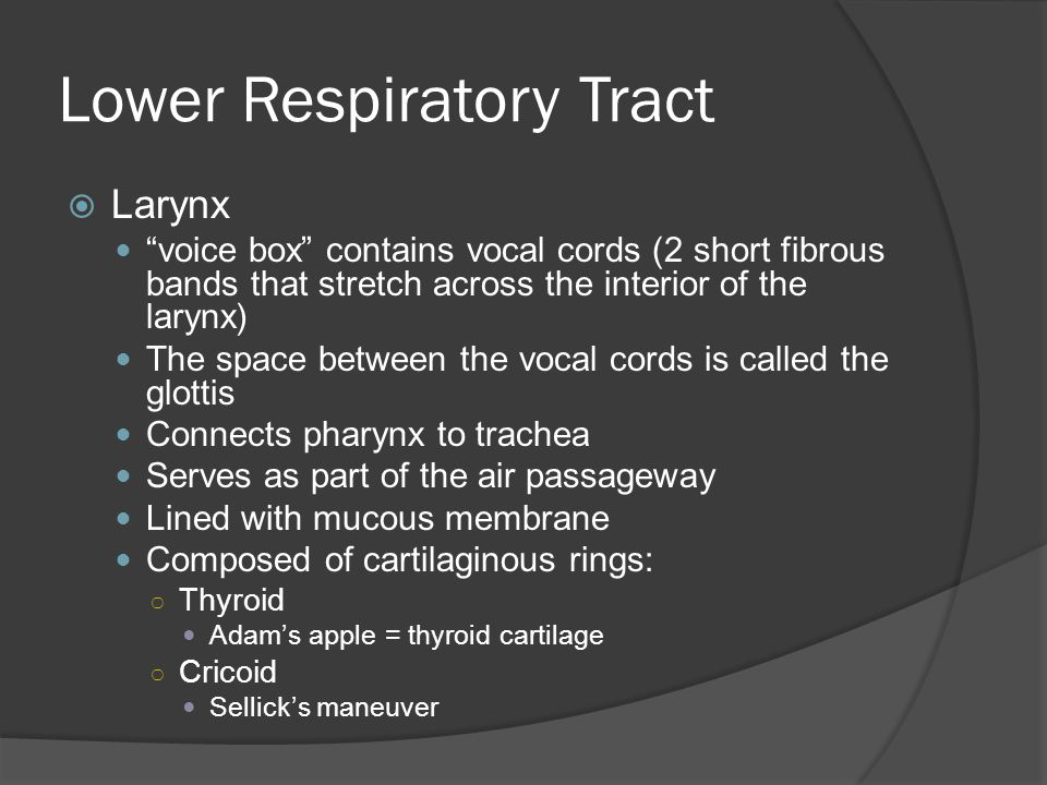 Lower Respiratory Tract  Larynx During swallowing, larynx elevates & epiglottis closes over opening to prevent food from entering Vocal cords-located on either side of glottis ○ Breathing- cords close over glottis.
