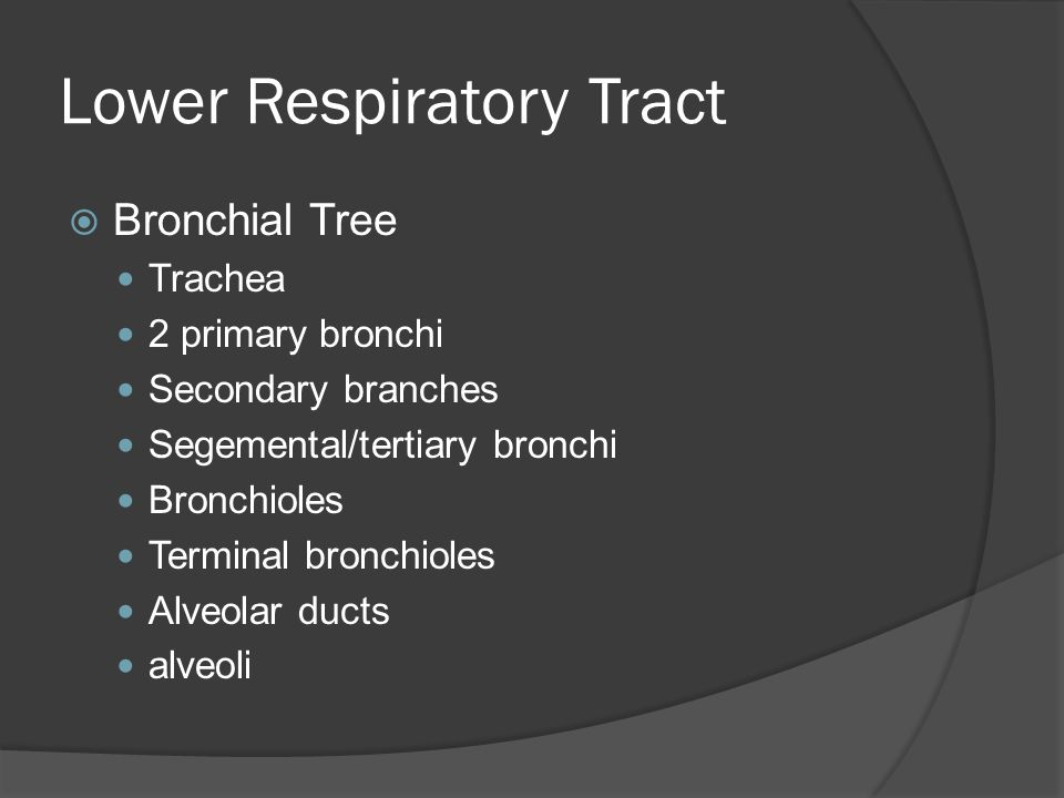 Lower Respiratory Tract  Bronchioles Simple epithelium Lack cilia, goblet cells, & cartilage Contain smooth muscle bundles-regulate diameter of lumen Exchange of gases Divide into alveolar ducts w/ alveoli surrounding each duct = alveolar ducts