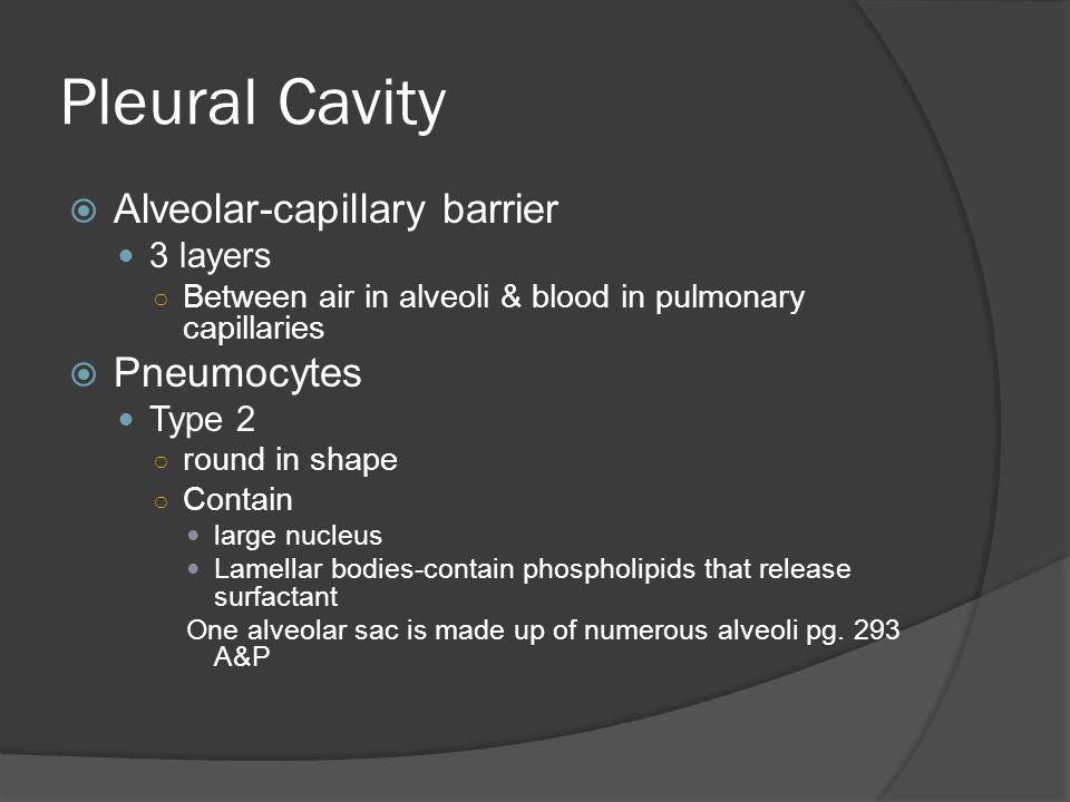 Microscopic View of Alveolar Sac