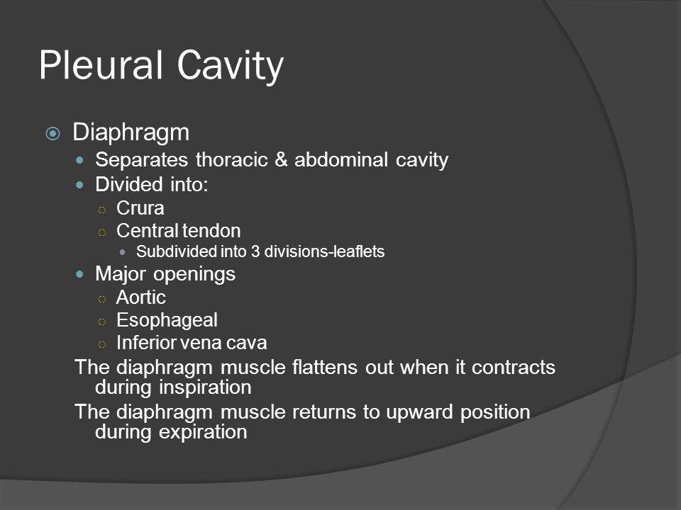Pleural Cavity  Diaphragm Blood supply ○ Branches of internal thoracic arteries Thoracic aorta Inferior phrenic arteries Lymph nodes ○ Located on superior surface ○ Receive drainage from liver & esophagogastric junction