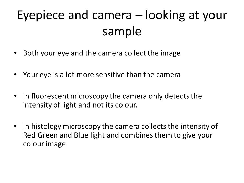 Eyepiece and camera – looking at your sample Both your eye and the camera collect the image Your eye is a lot more sensitive than the camera In fluorescent microscopy the camera only detects the intensity of light and not its colour.
