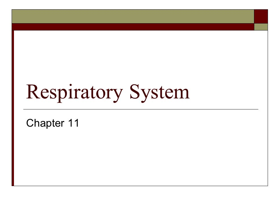 Respiratory System Chapter 11