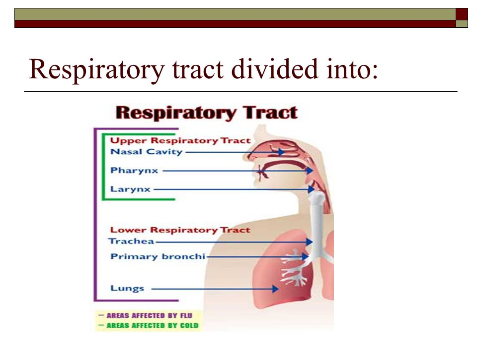 Respiratory tract divided into: