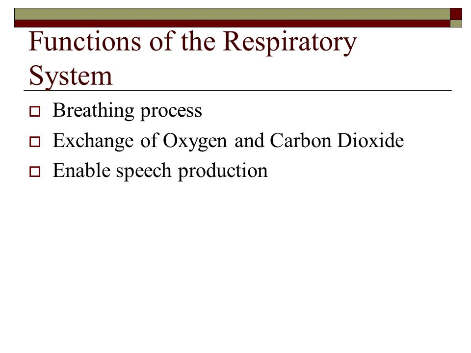 Functions of the Respiratory System  Breathing process  Exchange of Oxygen and Carbon Dioxide  Enable speech production