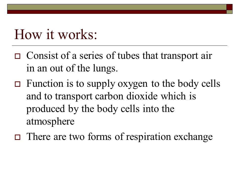 How it works:  Consist of a series of tubes that transport air in an out of the lungs.