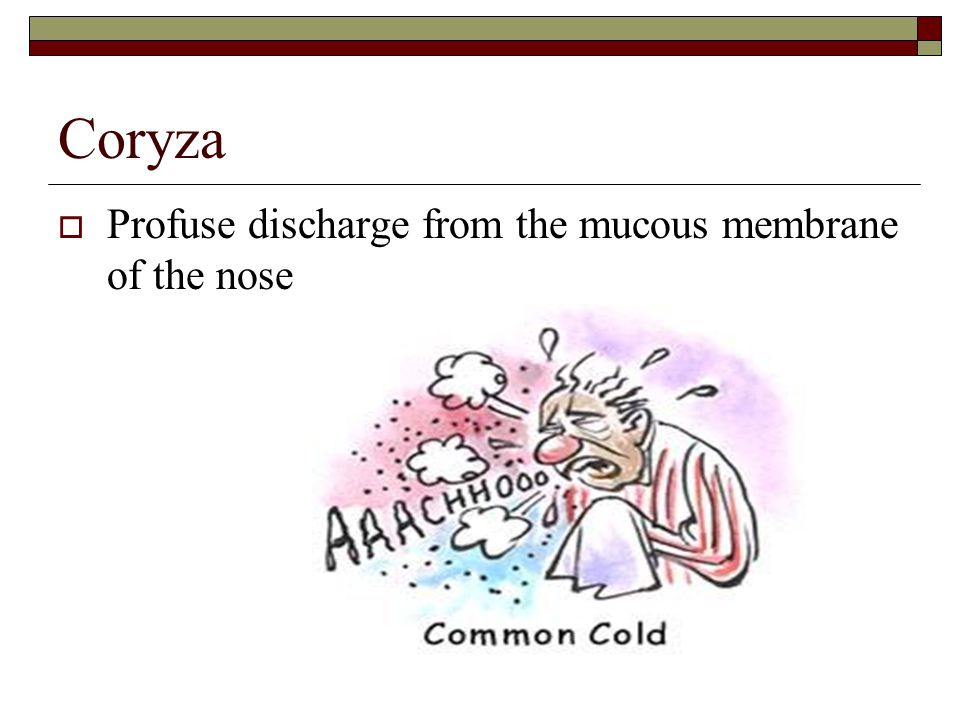 Coryza  Profuse discharge from the mucous membrane of the nose