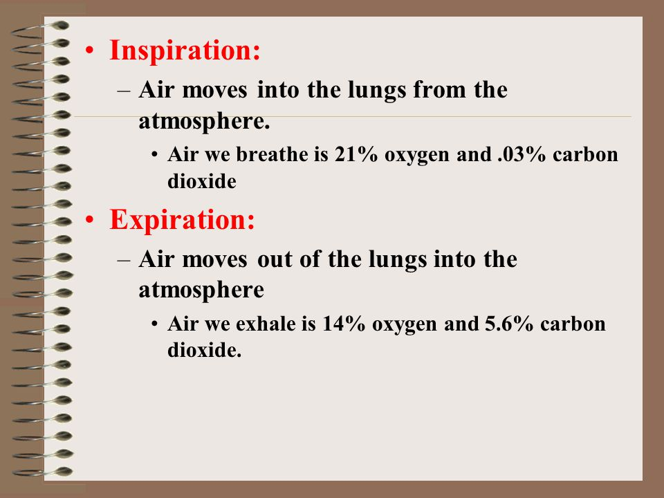 Inspiration: –Air moves into the lungs from the atmosphere. Air we breathe is 21% oxygen and.03% carbon dioxide Expiration: –Air moves out of the lung
