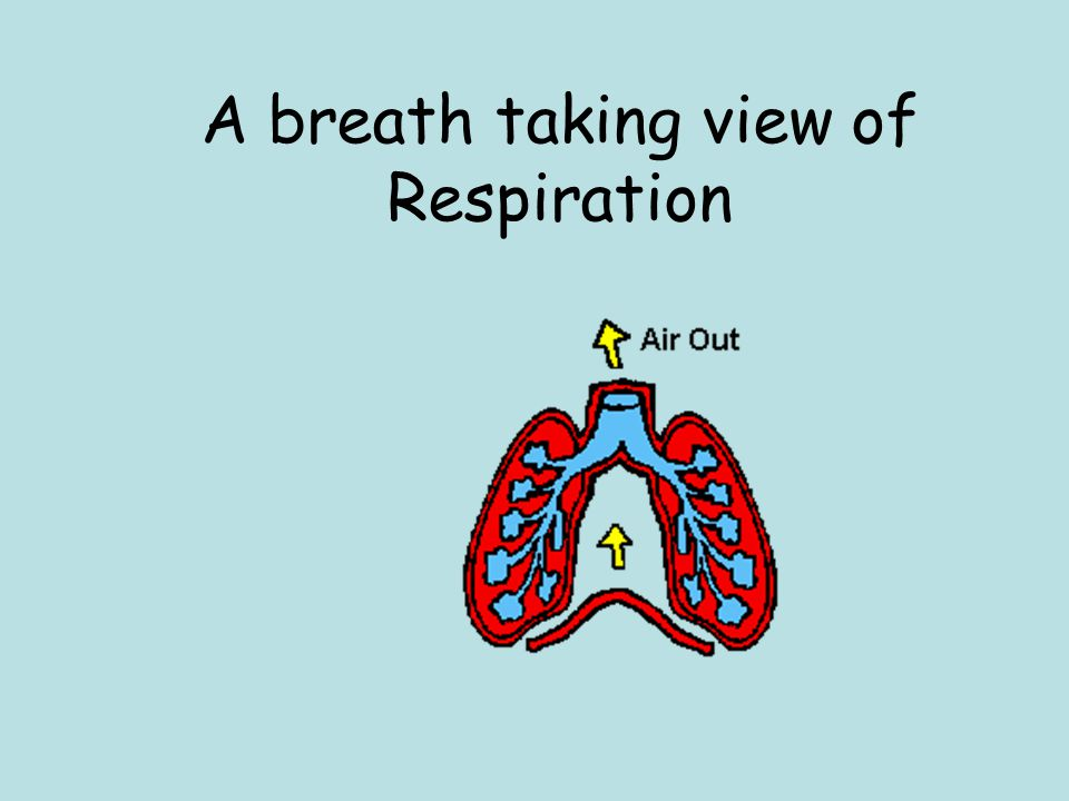 A breath taking view of Respiration