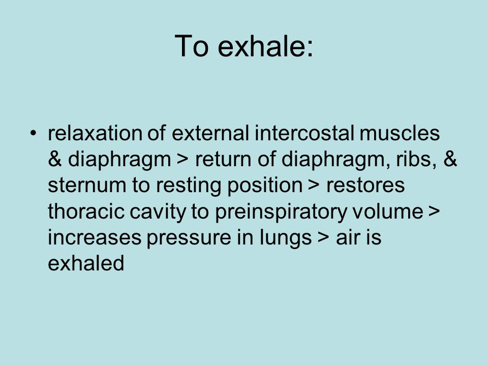 To exhale: relaxation of external intercostal muscles & diaphragm > return of diaphragm, ribs, & sternum to resting position > restores thoracic cavity to preinspiratory volume > increases pressure in lungs > air is exhaled