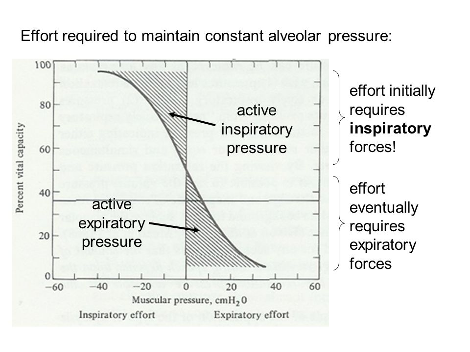 Effort required to maintain constant alveolar pressure: effort initially requires inspiratory forces.