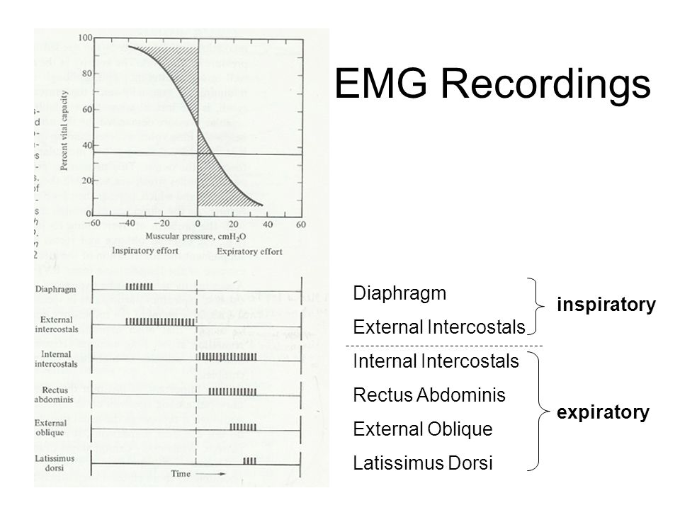 EMG Recordings Diaphragm External Intercostals Internal Intercostals Rectus Abdominis External Oblique Latissimus Dorsi inspiratory expiratory