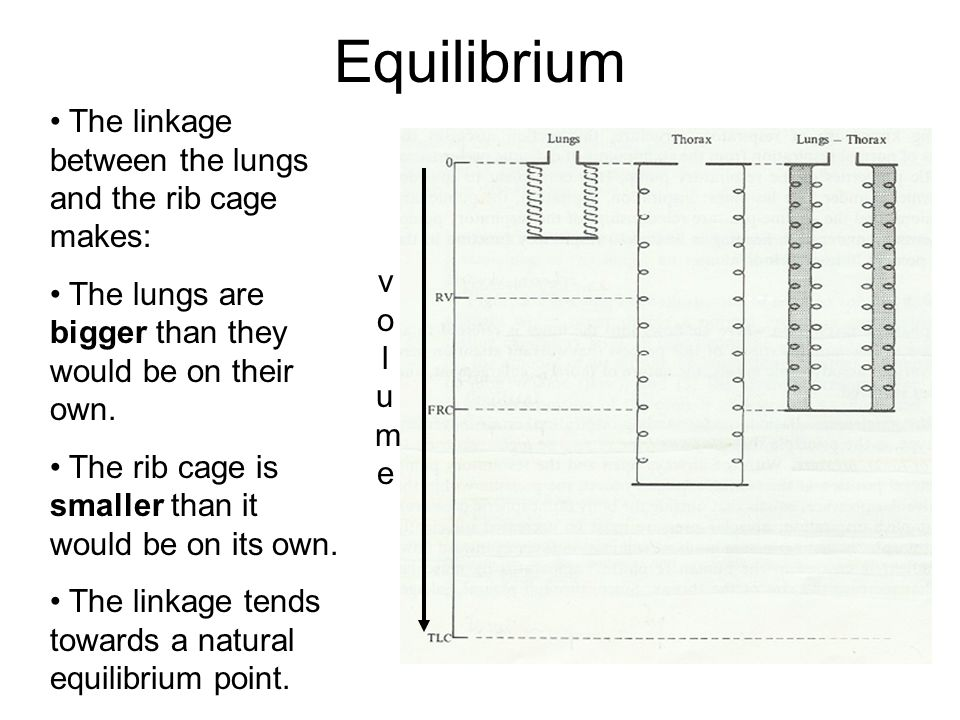 Equilibrium volumevolume The linkage between the lungs and the rib cage makes: The lungs are bigger than they would be on their own.