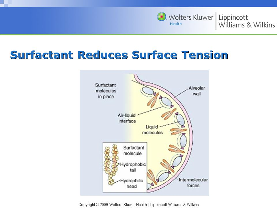 Copyright © 2009 Wolters Kluwer Health | Lippincott Williams & Wilkins Surfactant Reduces Surface Tension