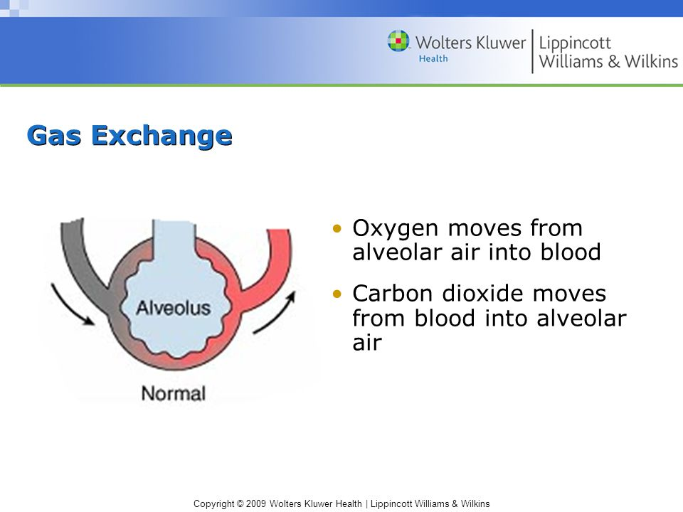 Copyright © 2009 Wolters Kluwer Health | Lippincott Williams & Wilkins Gas Exchange Oxygen moves from alveolar air into blood Carbon dioxide moves from blood into alveolar air
