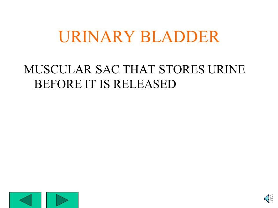 URETER THE NARROW TUBE THAT CONNECTS THE KIDNEYS TO THE URINARY BLADDER YOU HAVE TWO URETERS – ONE FROM EACH KIDNEY TO THE BLADDER