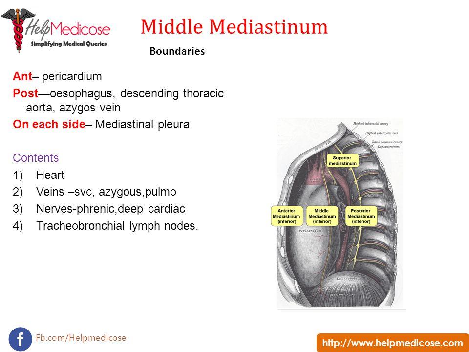 http://www.helpmedicose.com Fb.com/Helpmedicose Middle Mediastinum Boundaries Ant– pericardium Post—oesophagus, descending thoracic aorta, azygos vein