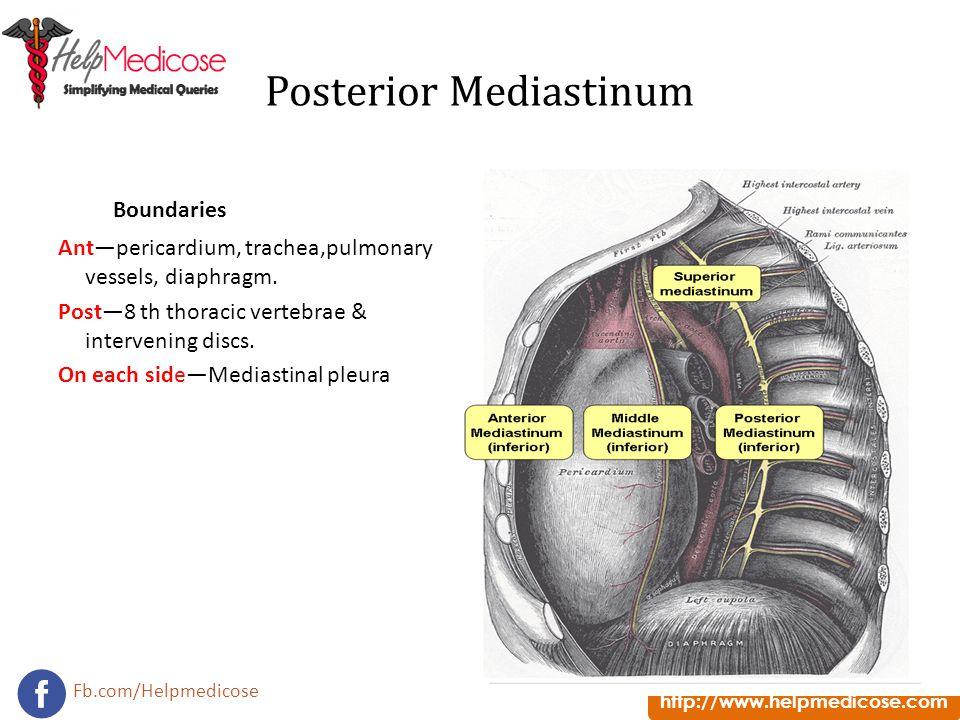 http://www.helpmedicose.com Fb.com/Helpmedicose Posterior Mediastinum Boundaries Ant—pericardium, trachea,pulmonary vessels, diaphragm. Post—8 th thor