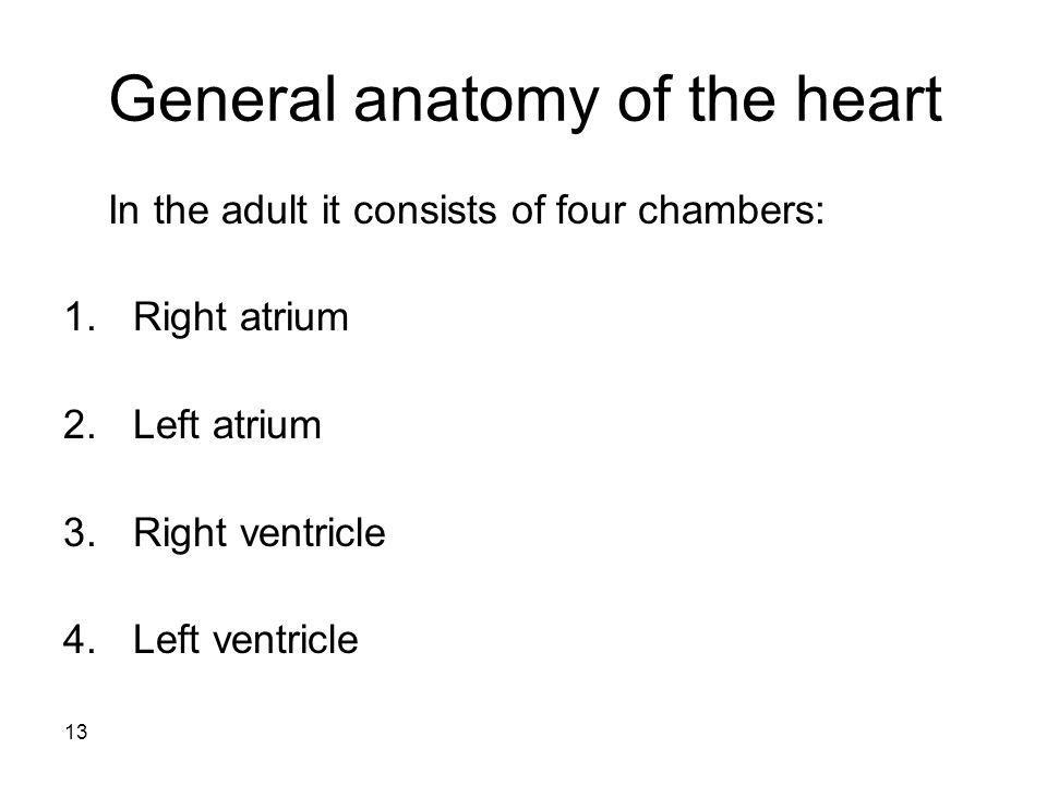 13 General anatomy of the heart In the adult it consists of four chambers: 1.Right atrium 2.Left atrium 3.Right ventricle 4.Left ventricle