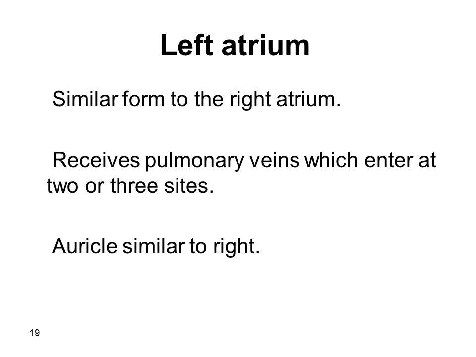 19 Left atrium Similar form to the right atrium.