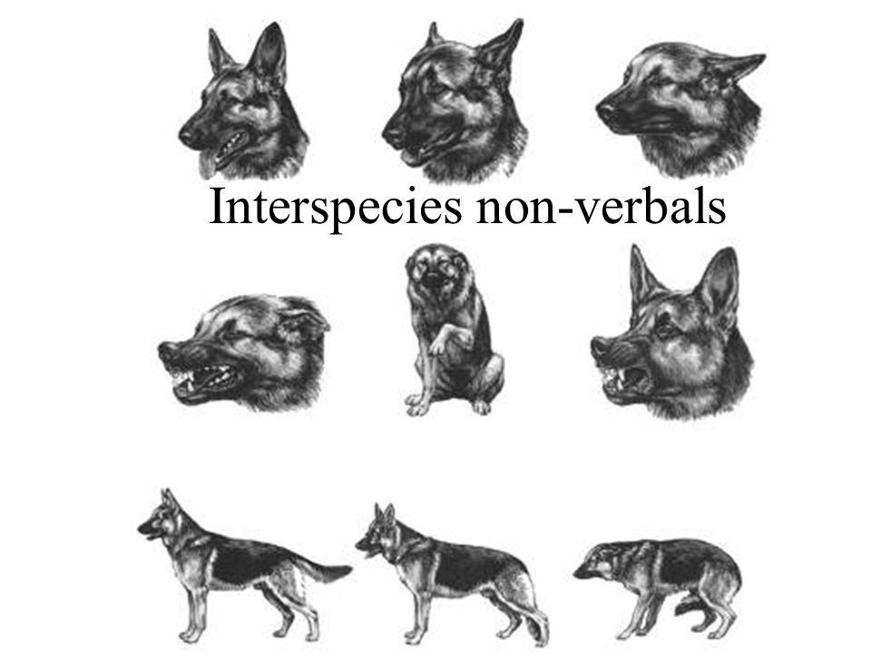 Interspecies non-verbals