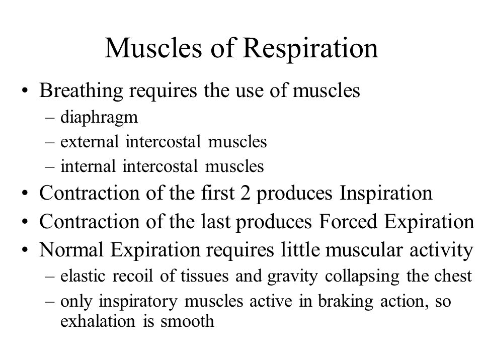 Muscles of Respiration Breathing requires the use of muscles –diaphragm –external intercostal muscles –internal intercostal muscles Contraction of the