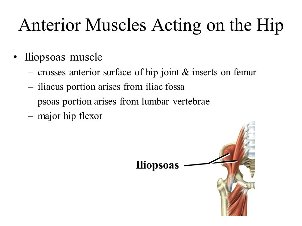 Anterior Muscles Acting on the Hip Iliopsoas muscle –crosses anterior surface of hip joint & inserts on femur –iliacus portion arises from iliac fossa