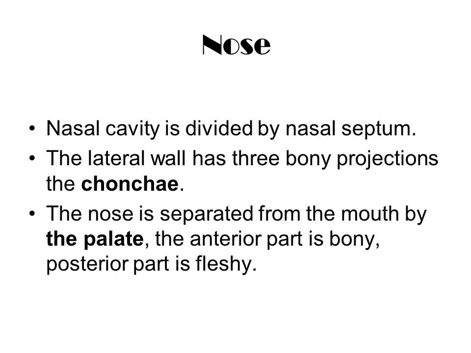 Nose Nasal cavity is divided by nasal septum. The lateral wall has three bony projections the chonchae. The nose is separated from the mouth by the pa