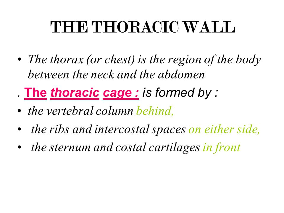 THE THORACIC WALL The thorax (or chest) is the region of the body between the neck and the abdomen. The thoracic cage : is formed by : the vertebral c
