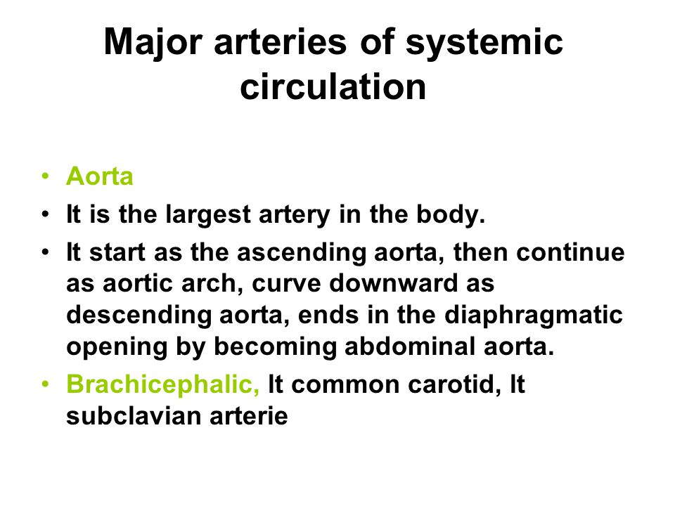 Major arteries of systemic circulation Aorta It is the largest artery in the body. It start as the ascending aorta, then continue as aortic arch, curv