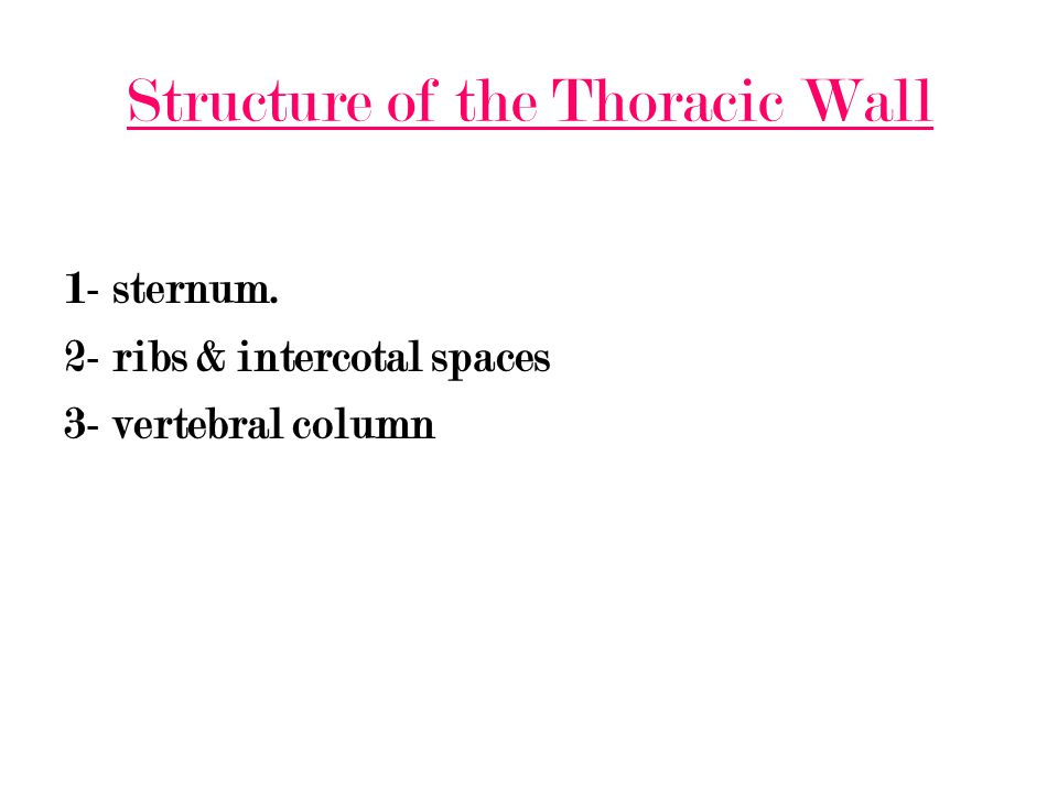 Structure of the Thoracic Wall 1- sternum. 2- ribs & intercotal spaces 3- vertebral column