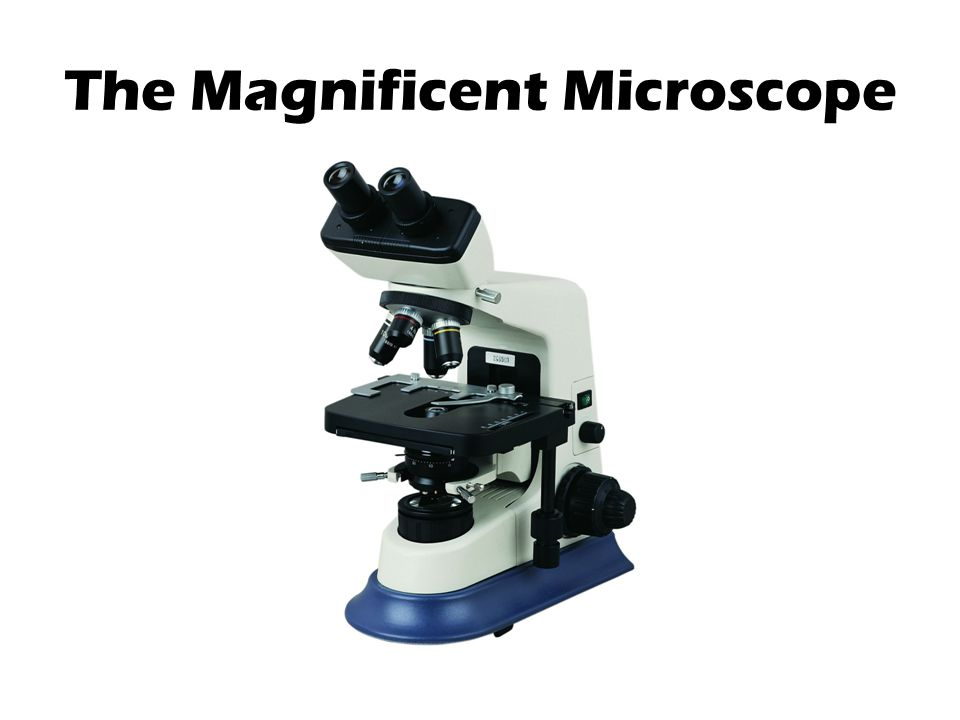 The Magnificent Microscope