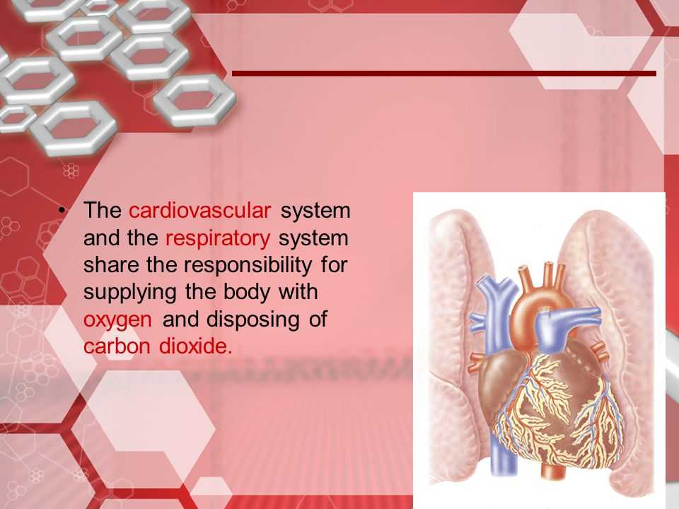 To understand ventilation it is necessary to:  There is a continuous column of air from the pharynx to the alveoli of the lungs  The lungs lie within the sealed-off thoracic cavity.