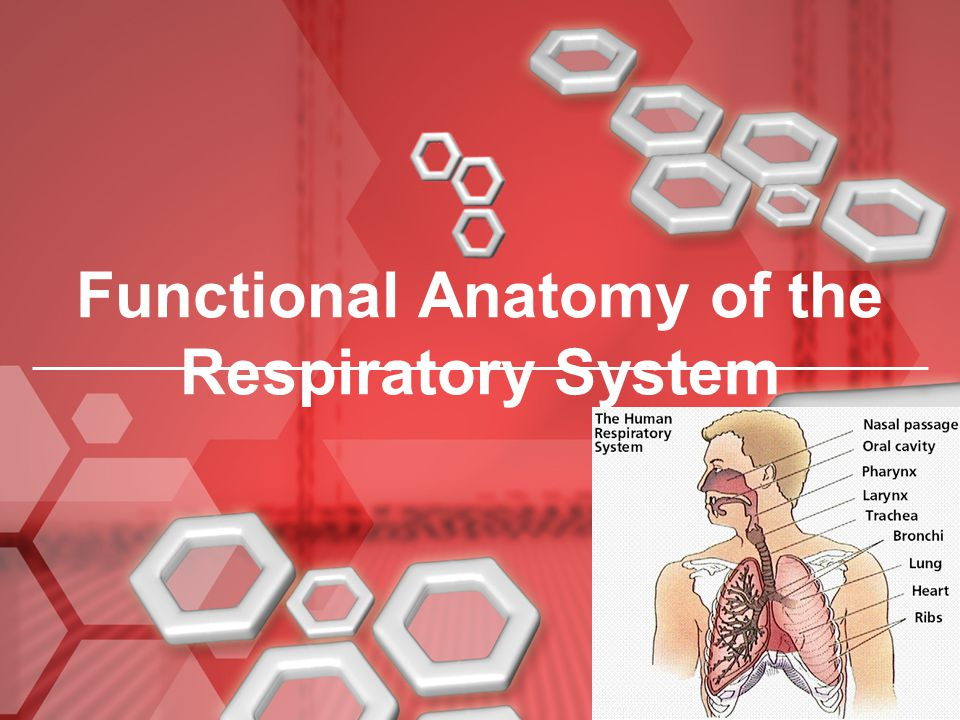 Respiratory Sounds