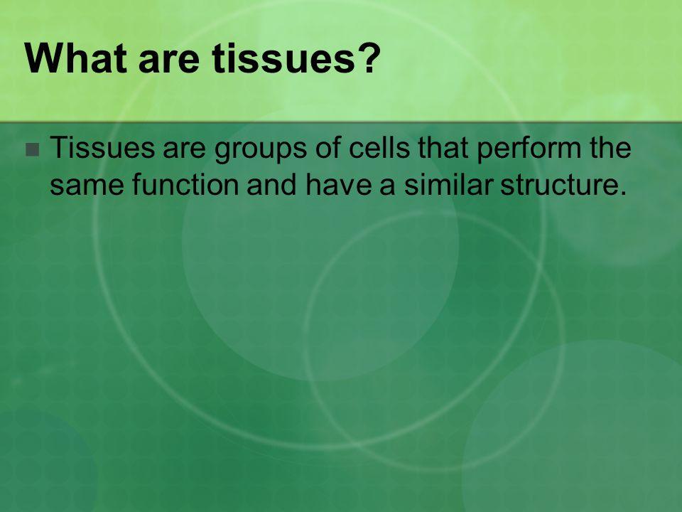 Digestive System: Diseases Ulcer Reflux Irritable bowel Lactose Intolerance Crohn's Disease