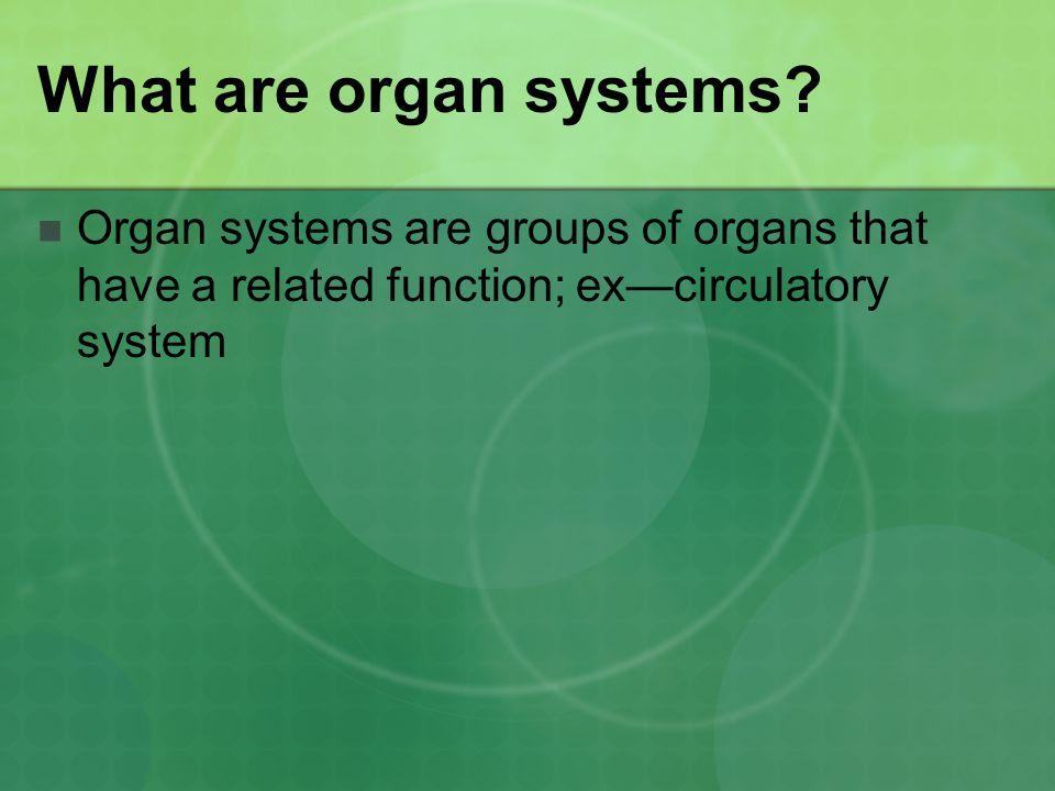 Respiratory System: Organs Larynx Trachea Lungs Diaphragm Bronchus