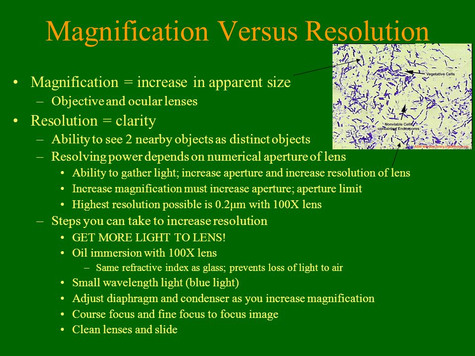 Magnification Versus Resolution Magnification = increase in apparent size –Objective and ocular lenses Resolution = clarity –Ability to see 2 nearby o