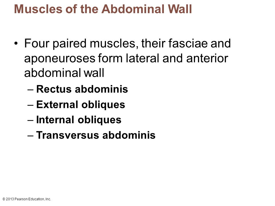 © 2013 Pearson Education, Inc.Figure 10.12a Muscles of the abdominal wall.