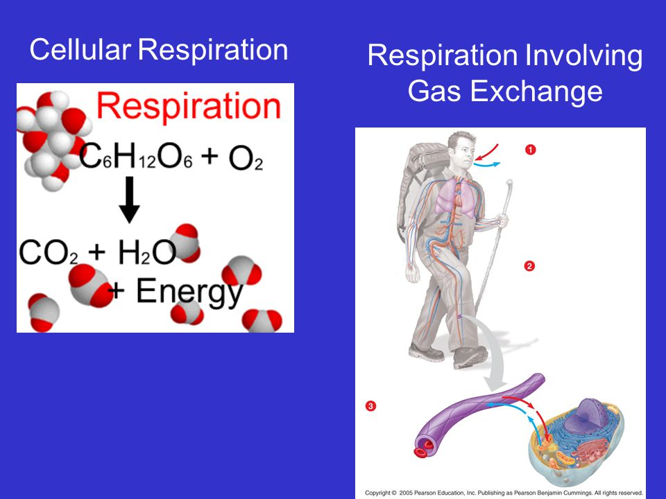 Cellular Respiration Respiration Involving Gas Exchange