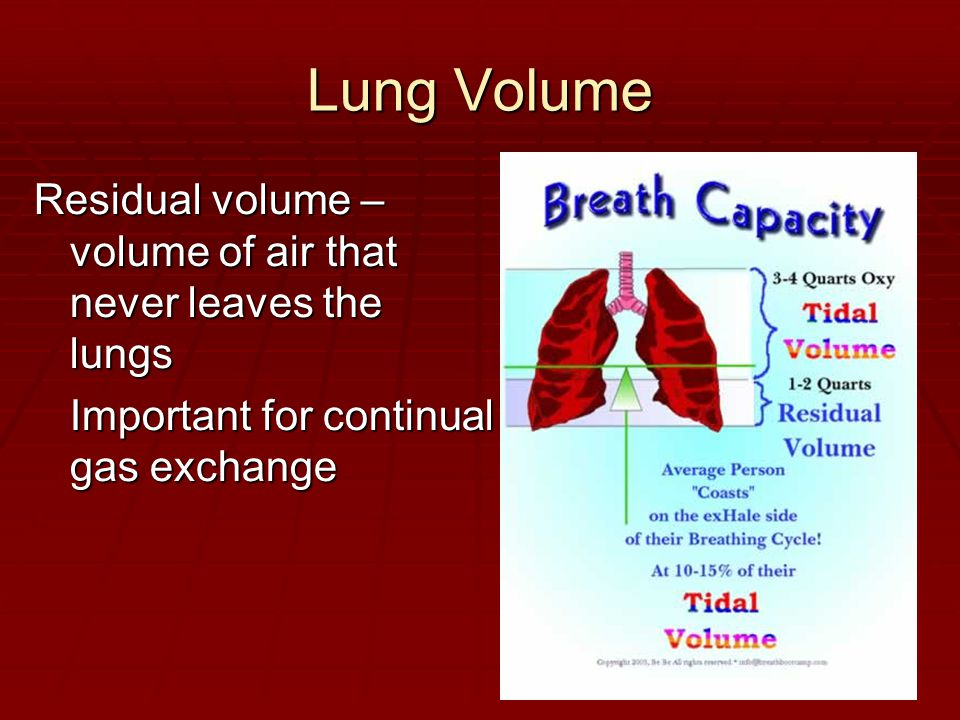 Lung Volume Residual volume – volume of air that never leaves the lungs Important for continual gas exchange