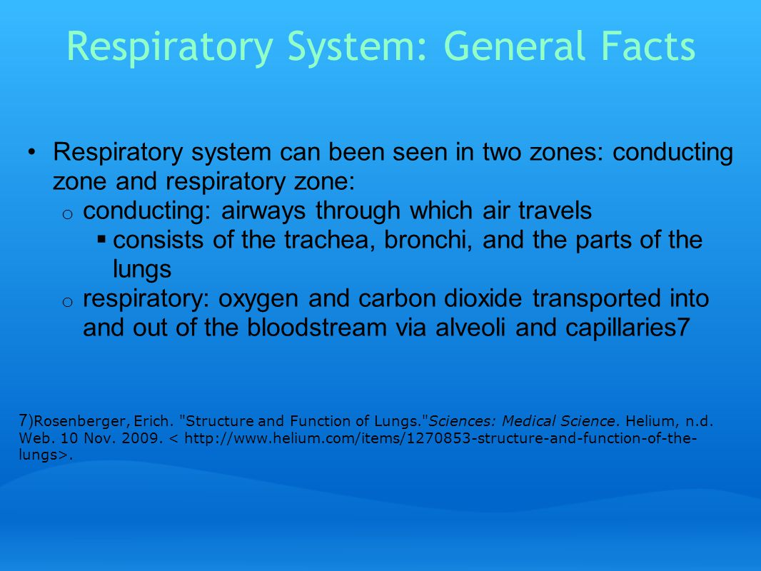 How Does the Air Get Into the Lungs.