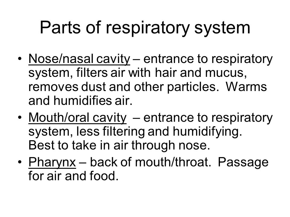 Parts of respiratory system Nose/nasal cavity – entrance to respiratory system, filters air with hair and mucus, removes dust and other particles. War