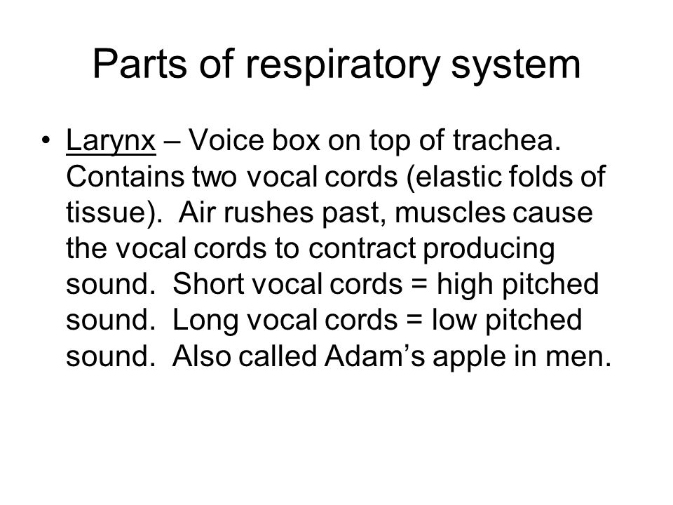 Parts of respiratory system Larynx – Voice box on top of trachea. Contains two vocal cords (elastic folds of tissue). Air rushes past, muscles cause t