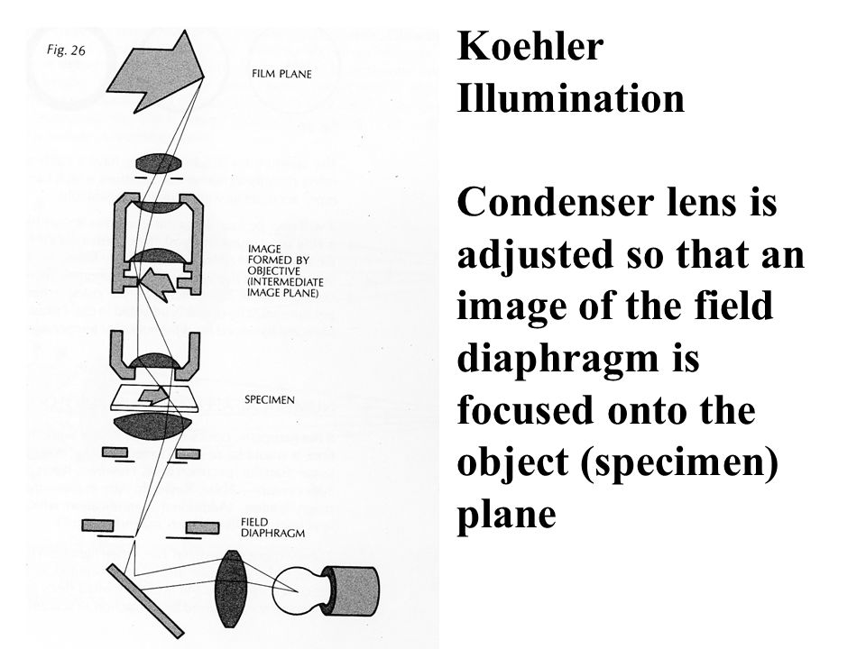 Koehler Illumination Condenser lens is adjusted so that an image of the field diaphragm is focused onto the object (specimen) plane