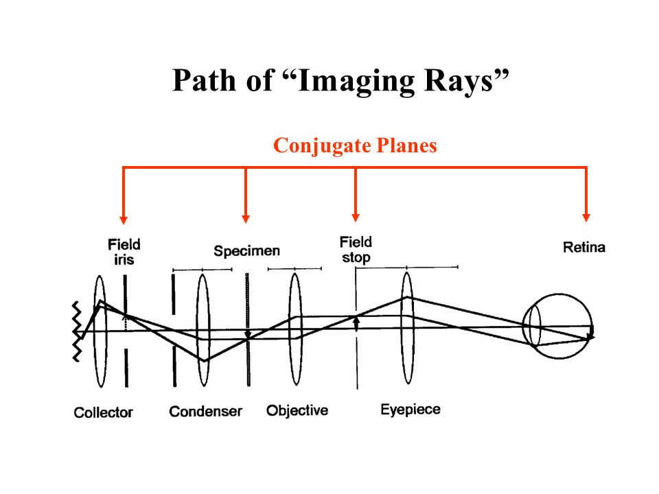 Path of Imaging Rays Conjugate Planes