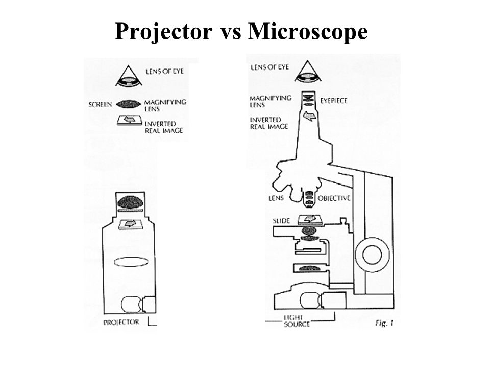 Projector vs Microscope