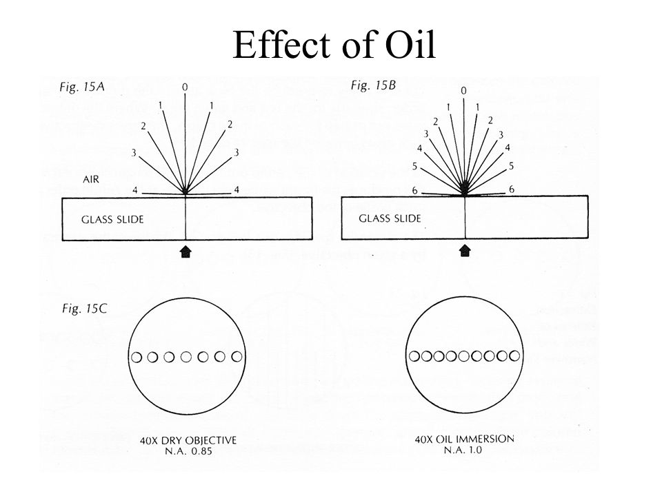 Effect of Oil