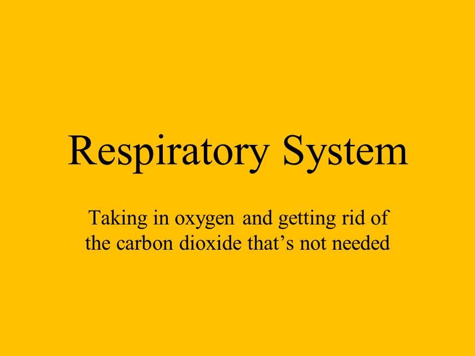 Respiratory System Taking in oxygen and getting rid of the carbon dioxide that's not needed