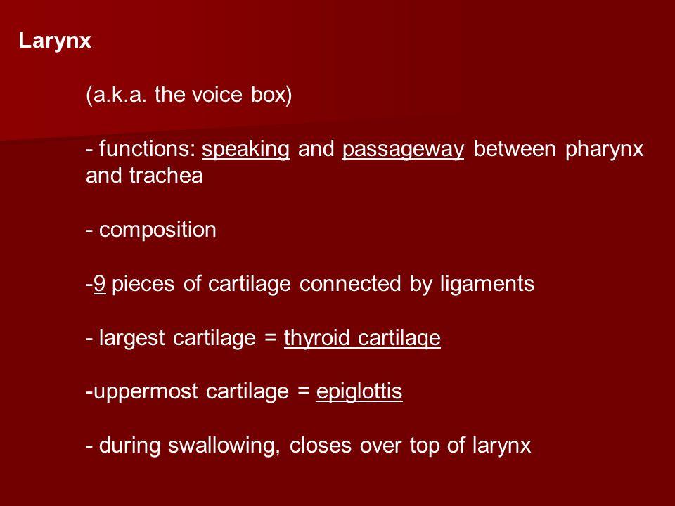 Larynx (a.k.a.