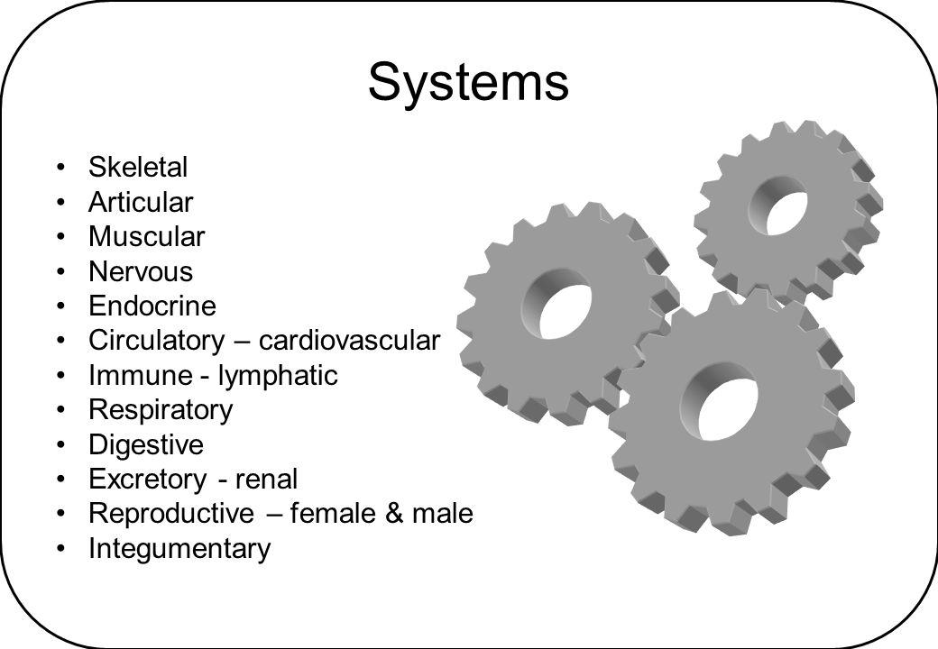 Nerves Cranial - trigeminal, facial & vagus Spinal –ARMUM –FOGS –Tibial; common, superficial & deep peroneal –Plantar – medial & lateral Autonomic –COPS –Splanchnics - greater, lesser & least; pelvic