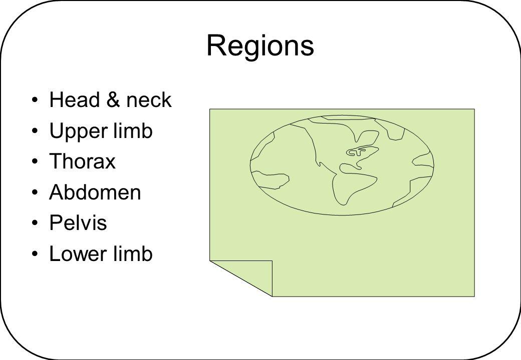 Region - Head Face Scalp Temporal region Infratemporal region Orbit Nasal cavity Oral cavity Ear - outer